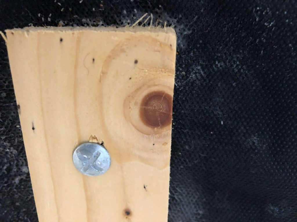 bed bug poop smears on box spring wooden frame